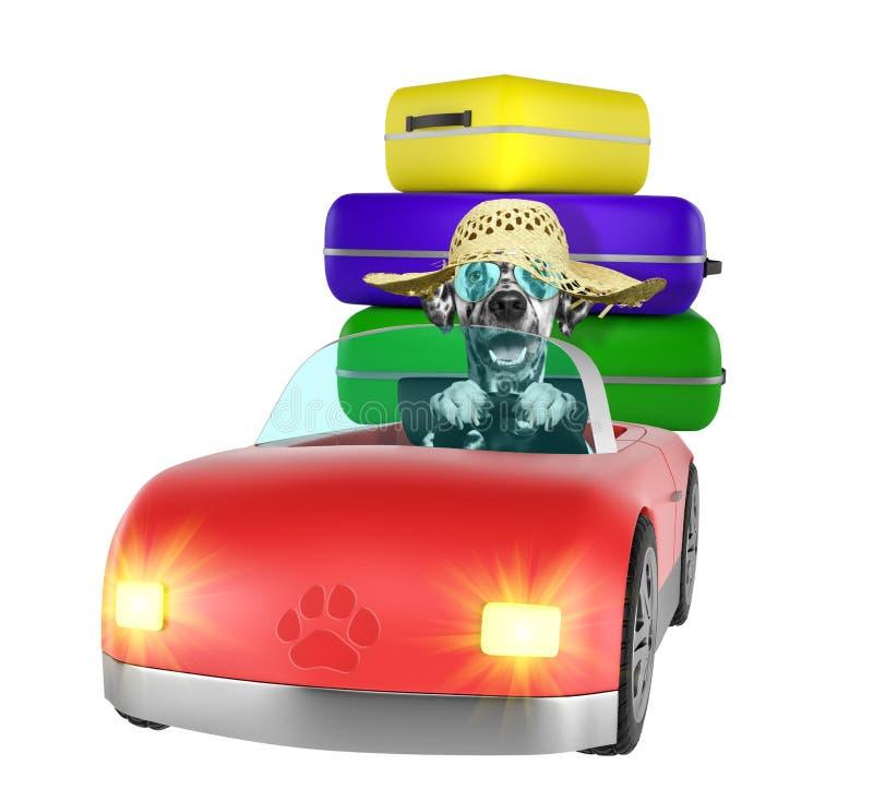 Далматинская собака идет путешествов автомобилем Изолировано на белизне иллюстрация вектора