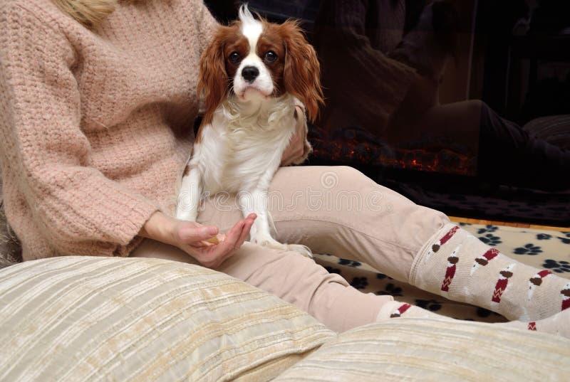Дама и собака (кавалерийский spaniel короля Чарльза) наслаждаясь елью стоковые фото