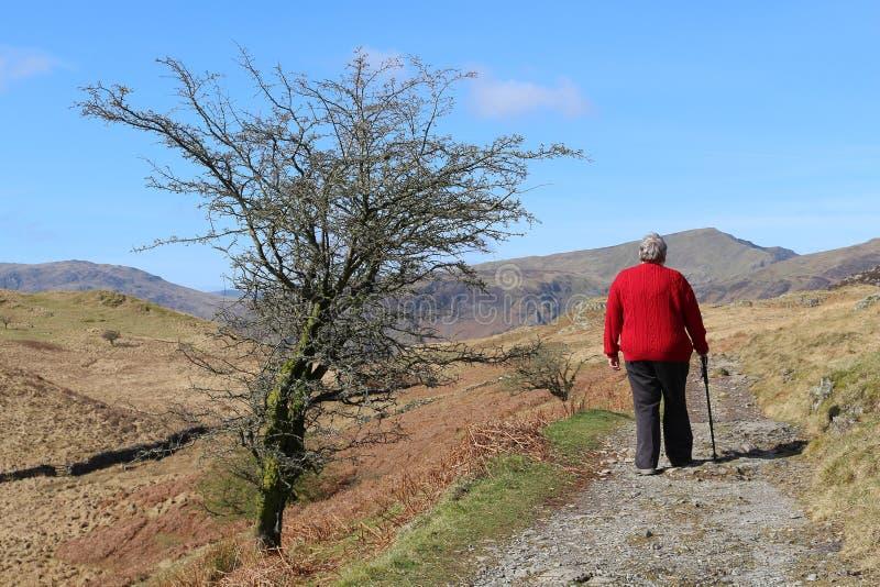 Дама идя на тропу горы в районе озера стоковое фото