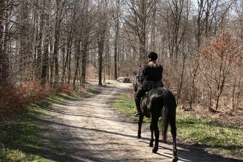 датские лошади стоковые изображения