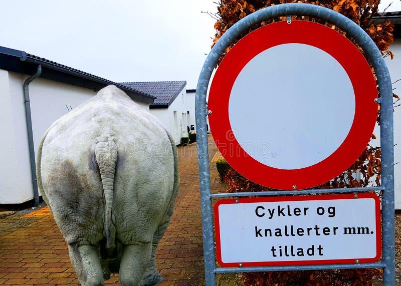 Датский дорожный знак и носорог в городе стоковая фотография rf