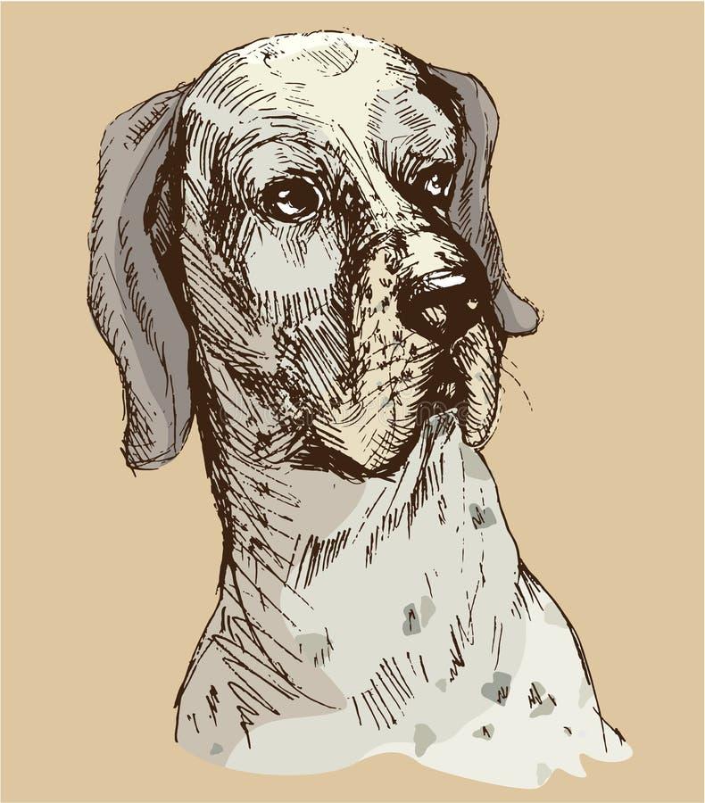 Далматинская голова - вручите вычерченную иллюстрацию - эскиз в винтажном styl иллюстрация вектора