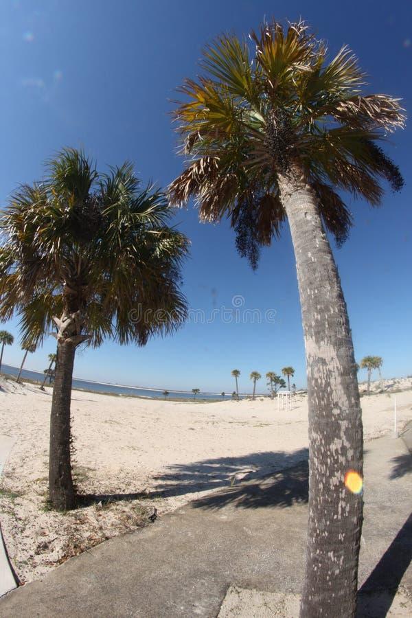 Два пальмовых дерева стоят на пляже стоковое фото