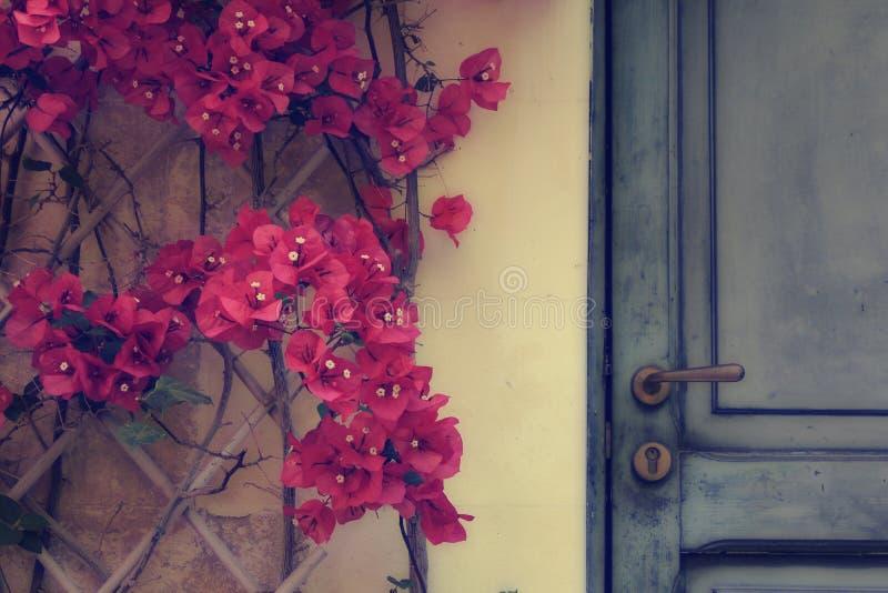 Дверь и bouganvillea стоковое фото rf