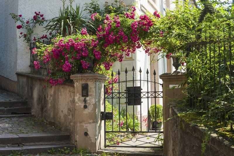 Дверь сада с розовыми кустарниками на лестницах замка в Баден-Бадене стоковые изображения rf