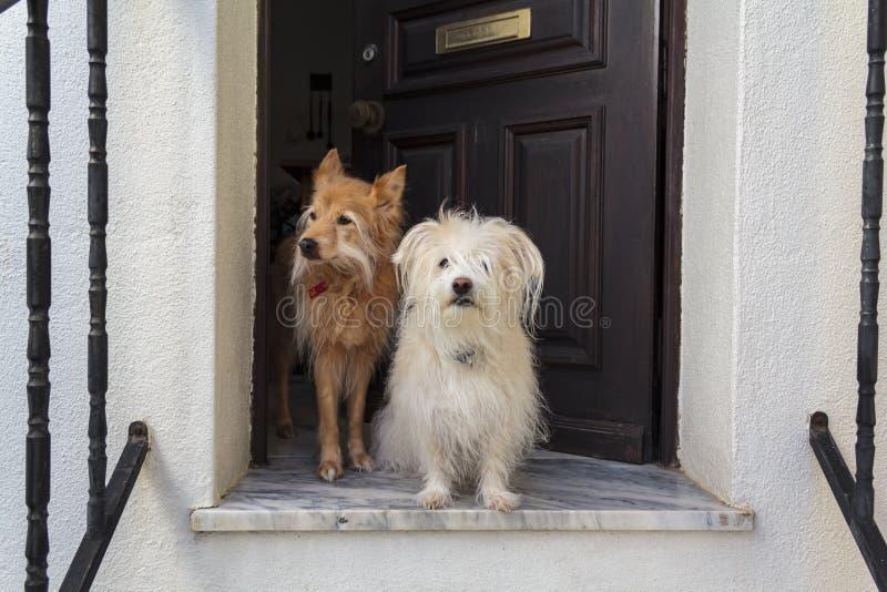 Собаки у порога картинки