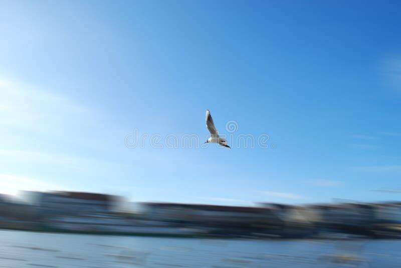 движение птицы стоковые изображения rf