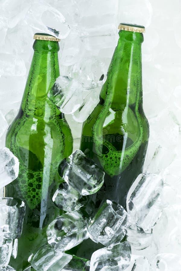 Двойная пивная бутылка в льде на белизне стоковое фото rf