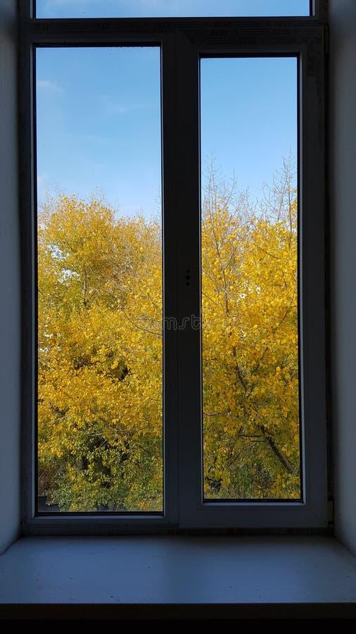 Двойное обрамленное окно с деревом лист осени золотым стоковые фото