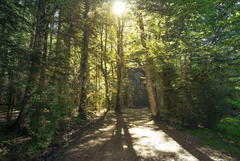 Двойной лес на восходе солнца с солнцем поднимая за деревом Национальный парк Orexposure фото Bitcoin и диаграмм фондовой биржи стоковое изображение