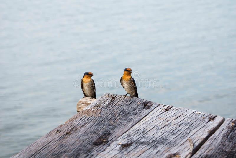 Двойные маленькие птицы стоковые изображения rf