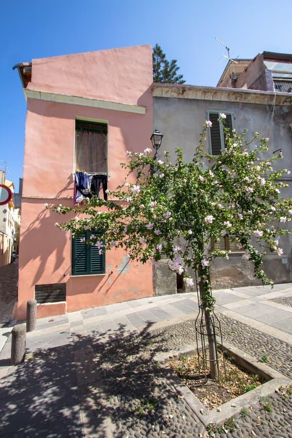 Двор с деревьями и розовым домом, Sassari, Италией стоковая фотография