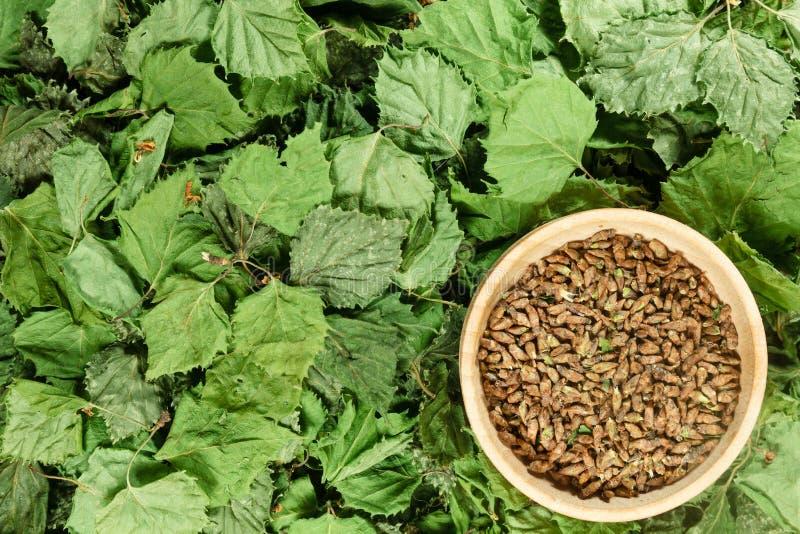 двухчленной Сухие заводы Фитотерапия, phytotherapy целебные травы стоковая фотография