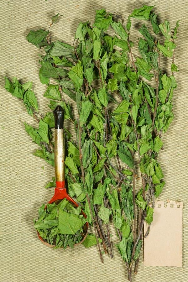 двухчленной Сухие заводы Фитотерапия, phytotherapy целебные травы стоковые изображения rf