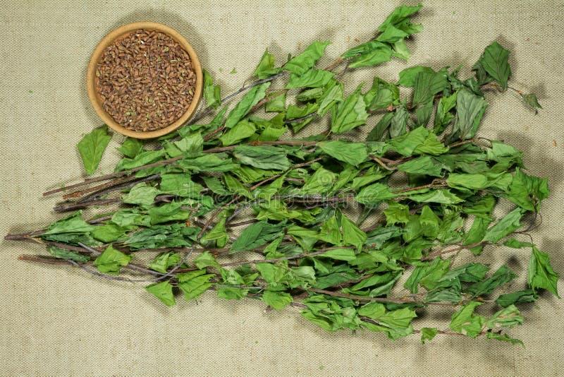 двухчленной Сухие заводы Фитотерапия, phytotherapy целебные травы стоковое фото rf