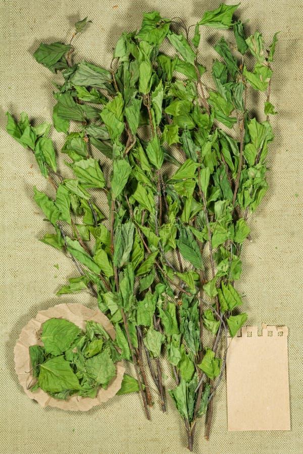 двухчленной Сухие заводы Фитотерапия, phytotherapy целебные травы стоковое изображение