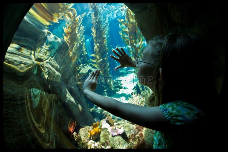 девушка аквариума стоковые изображения