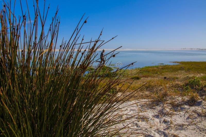 Девушка бежать через seagrass стоковые фотографии rf
