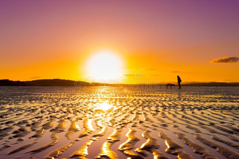 Девушка битника играя с собакой на пляже во время захода солнца стоковое фото