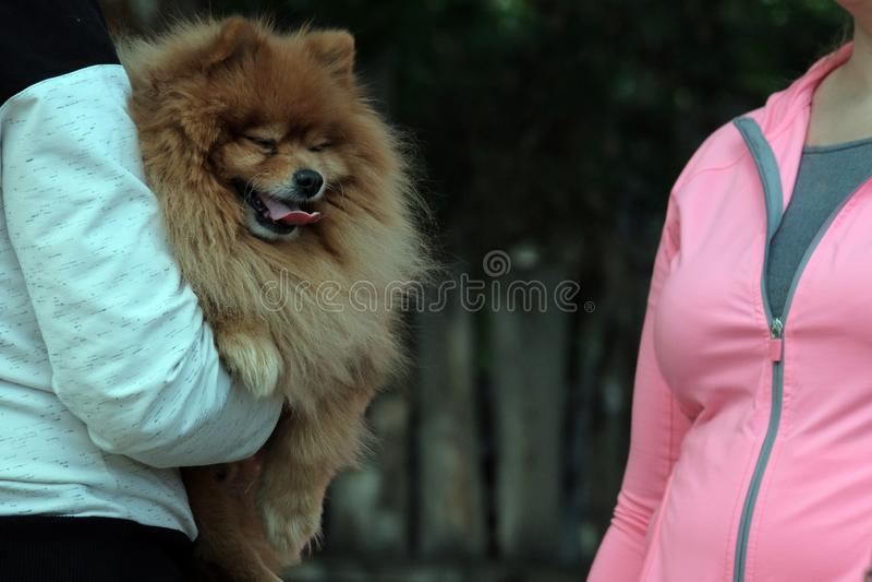 Девушка в белых одеждах держа красную собаку породы шпица в ее оружиях и говоря к женщине в розовой куртке Лето любимчик концепци стоковые фотографии rf
