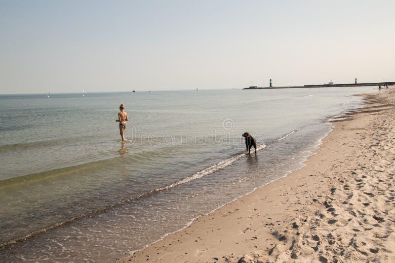 Девушка в бикини играя с ее собакой на пляже стоковое фото rf