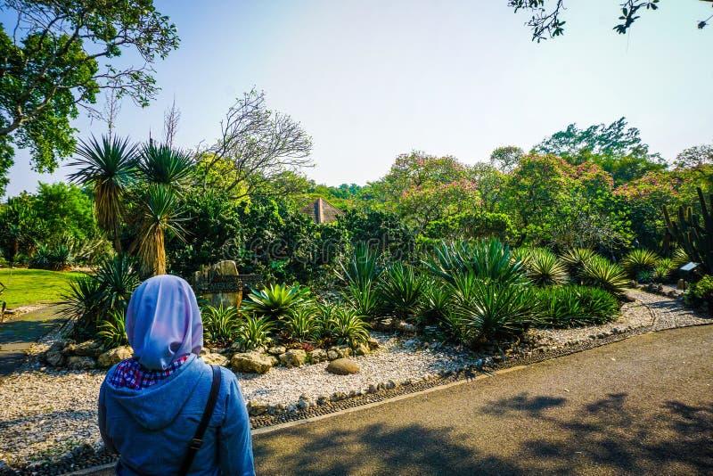 Девушка в вуали видит красивый парк сада кактуса на стороне дороги - фото стоковая фотография rf