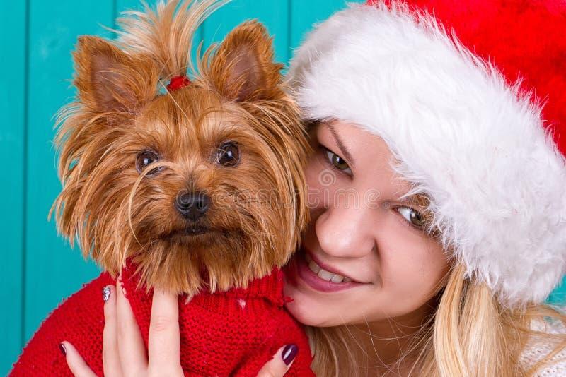 Девушка в крышке santa с собакой yorkie в красном свитере стоковое изображение