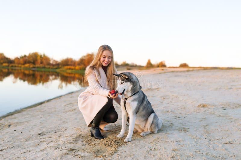 Девушка играет с собакой на речном береге Красивейшая осиплая собака зима речной воды ландшафта льда свободного полета Осень стоковые фото