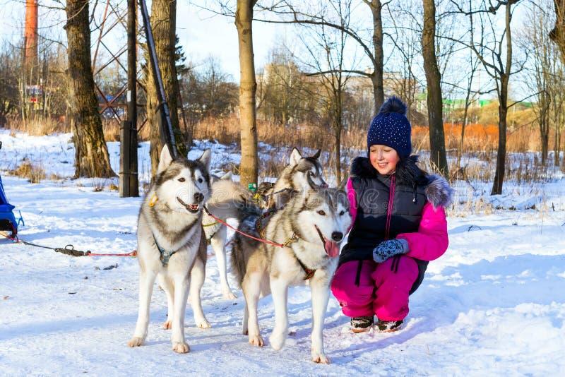 Девушка играя с лайкой собак скелетона сибирской в снеге стоковая фотография