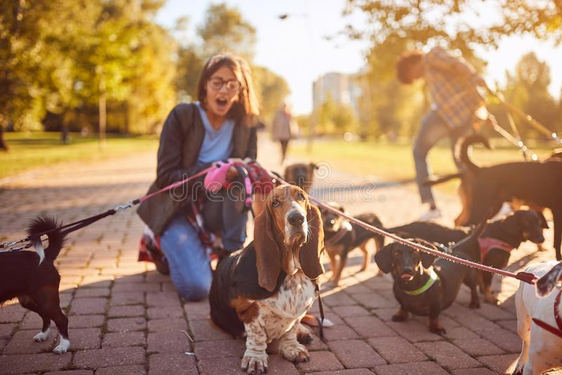 Девушка идя группа в составе собаки и наслаждаясь outdoors стоковая фотография rf