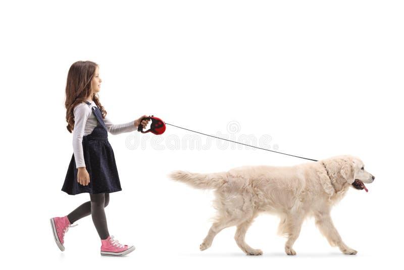 Девушка идя собака retriever labrador стоковое изображение rf