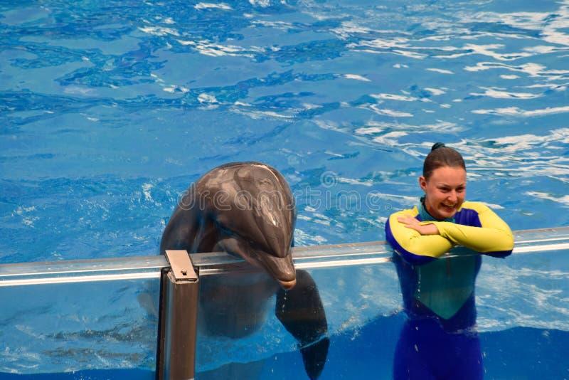Девушка инструктора и славный дельфин смотря публику стоковое фото