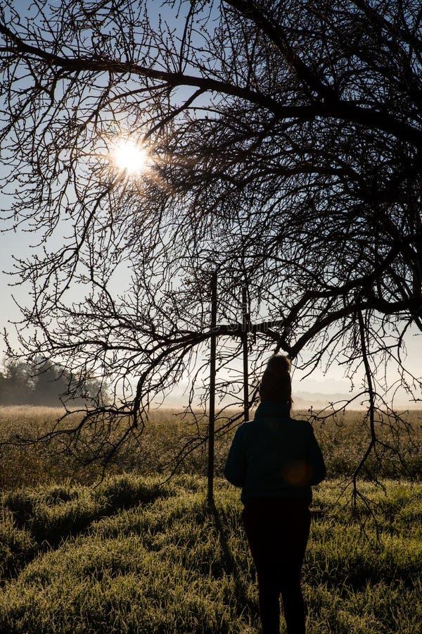 Девушка и восход солнца и дерево как рамка стоковые фотографии rf