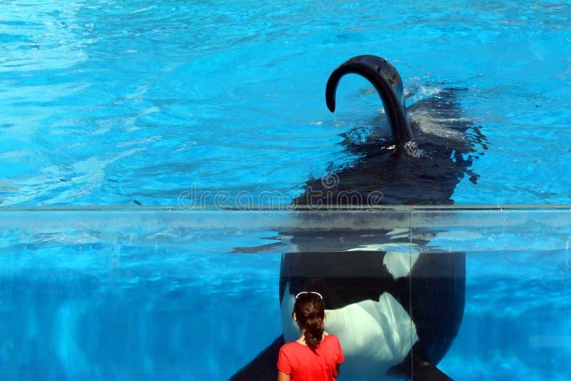 Девушка и кит стоковые фото