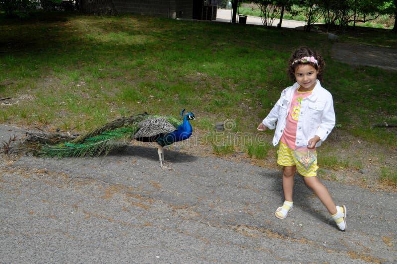 Девушка и павлин стоковое изображение rf