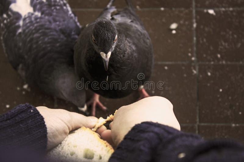 Девушка и птица стоковые изображения rf