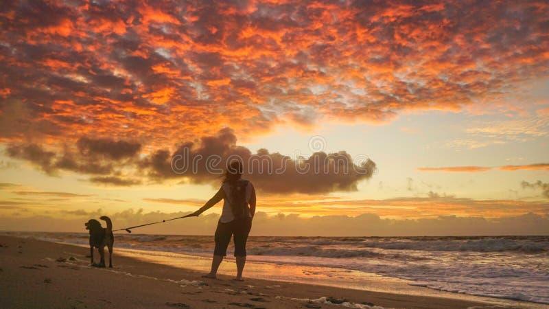 Девушка и собака на пляже на рассвете стоковое фото rf