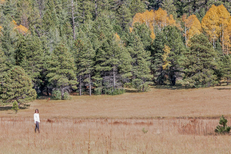 Девушка идя в осины стоковое фото rf