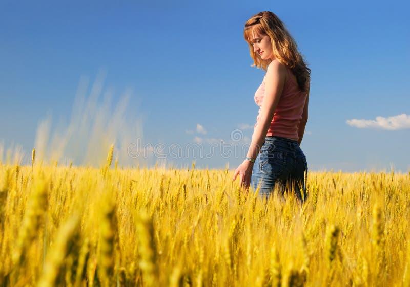 девушка поля стоковые фотографии rf