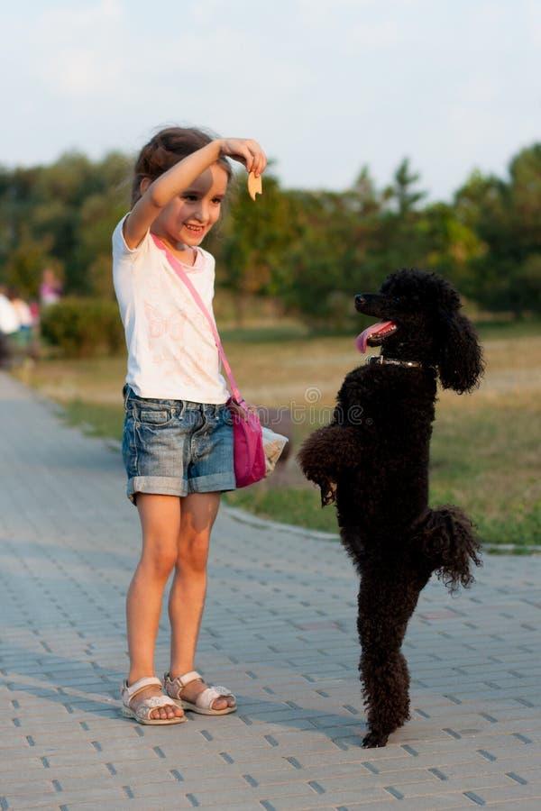 Девушка подавая черный пудель стоковая фотография