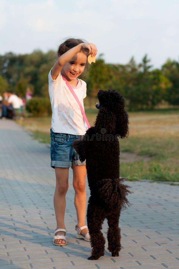 Девушка подавая черный пудель стоковое фото rf