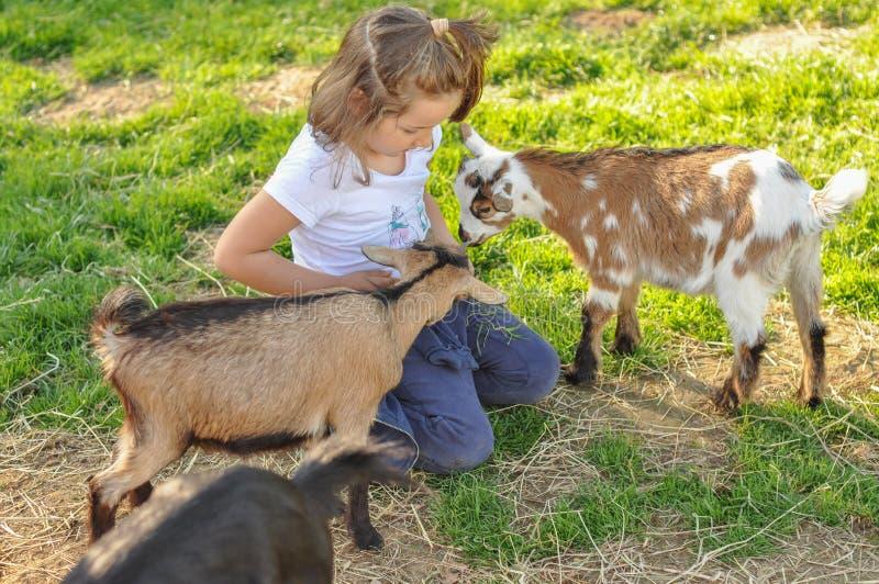 Девушка ребенка играя с козами младенца, стоковые фото