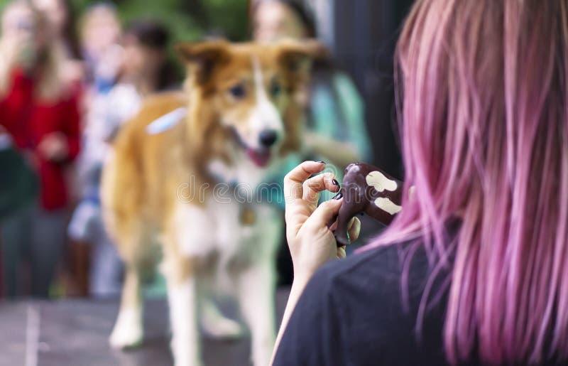 Девушка руки с обслуживанием для собаки Собака смотрит обслуживание в руке хозяйки стоковые изображения