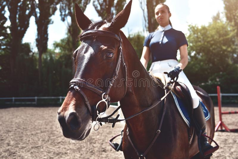 Девушка рядом с лошадью, катание жокея портрета, концепция рекламировать конноспортивный клуб, подготавливая для скачек o E стоковые фотографии rf