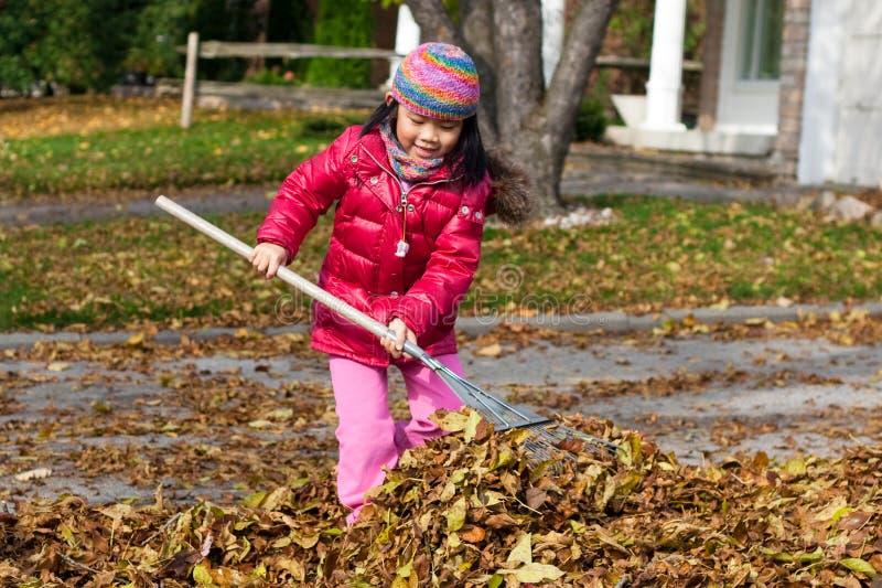 Девушка сгребая листья стоковое фото rf