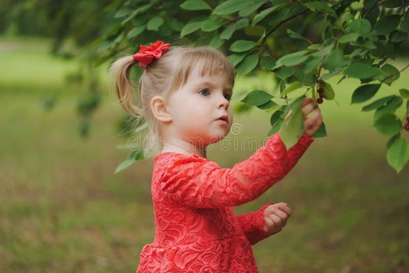 Девушка смотрит неизвестные ягоды в парке стоковые фотографии rf