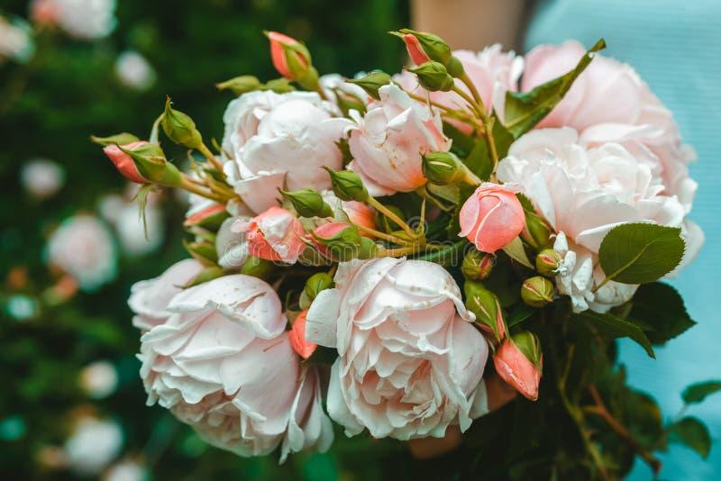 Девушка собрала букет роз в саде стоковые изображения rf