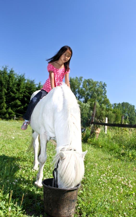 Девушка с белой лошадью в Дании стоковые изображения