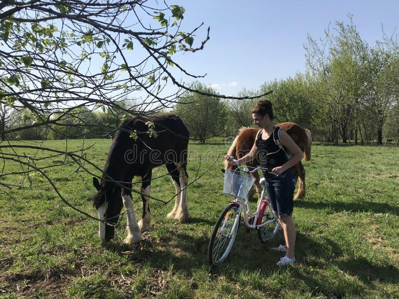 Девушка с велосипедом причалила лошадям пася в луге За девушками укладывайте рюкзак, наушники в их ушах стоковое изображение rf
