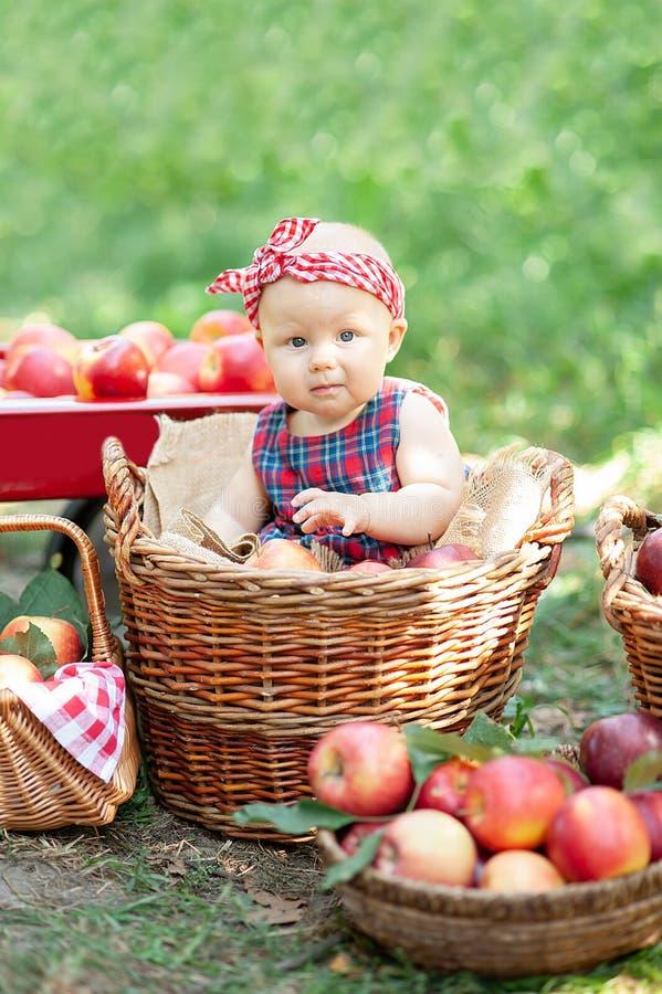 Девушка с Яблоком в яблоневом саде Красивая девушка есть органическое Яблоко в саде Принципиальная схема хлебоуборки Сад, еда мал стоковое изображение rf